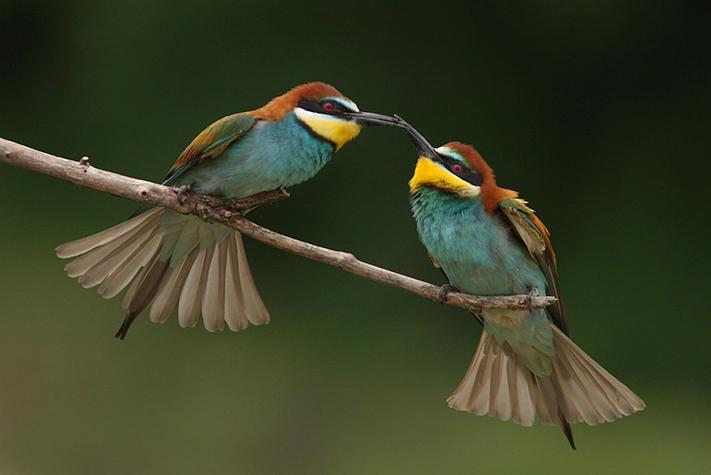 Thiên đường cho những người yêu chim