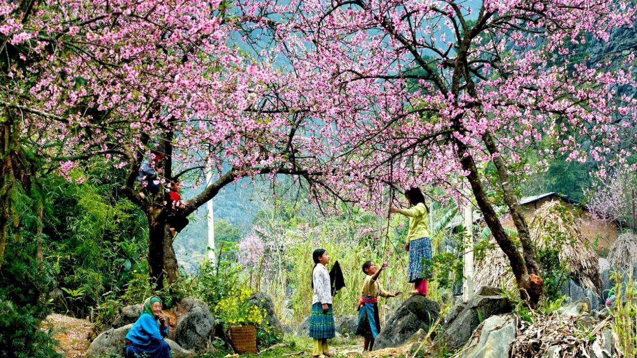 Vườn hoa Hàm Rồng